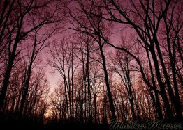 Pink Woodlands...
