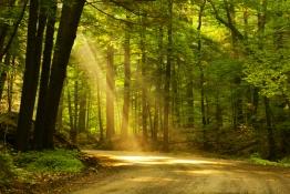 Sunlight Woodland