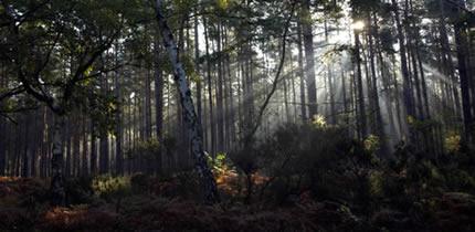 Cool woodland