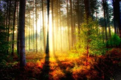 Bright Woodland